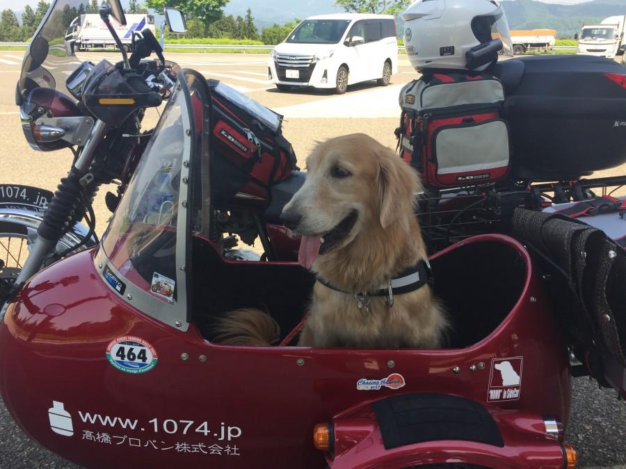 No.118  神奈川県 高橋秀徳さん「サイドカー犬モモちゃん」